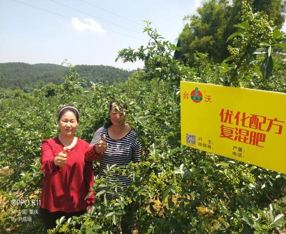 重庆涪陵区复兴乡花椒种植户为台沃花椒营养套餐竖起大拇指.jpg